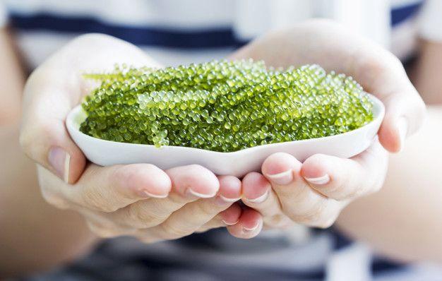 Green caviar ia in cosmetics